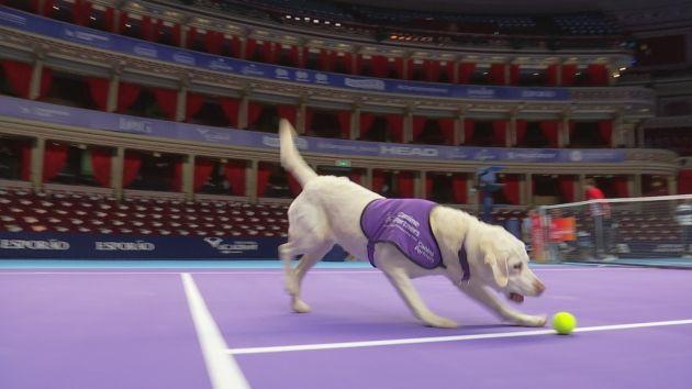 Кучета замениха подавачите на топки (видео)
